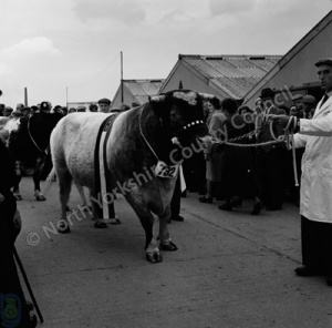 Great Yorkshire Show, 1960
